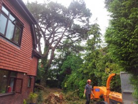 Sidmouth Tree Surgeon
