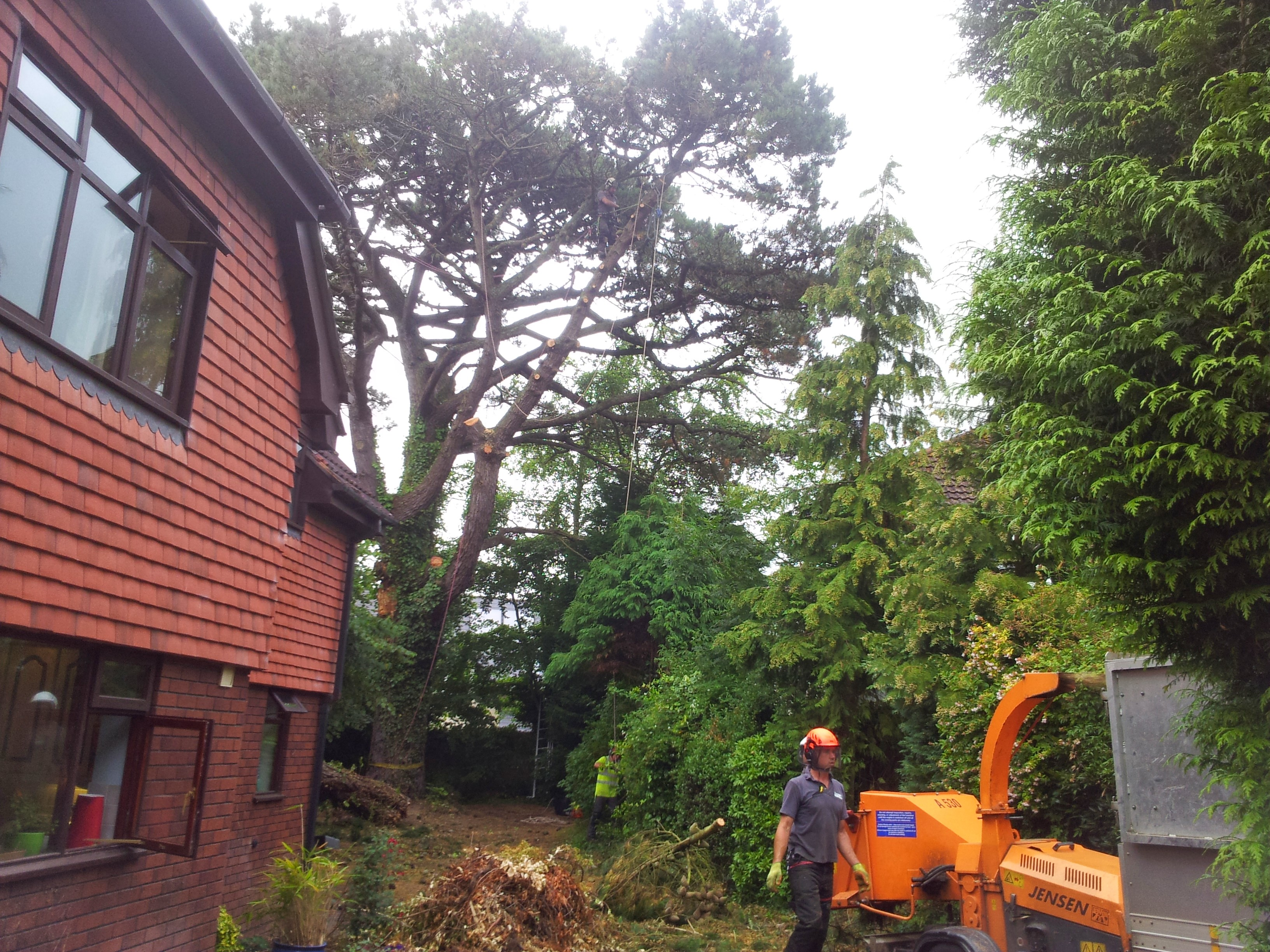how to become a tree surgeon uk