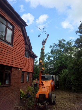 Sidmouth Tree Surgeon Dismantle