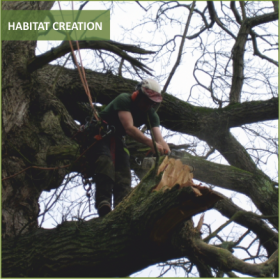 Habitat Creation