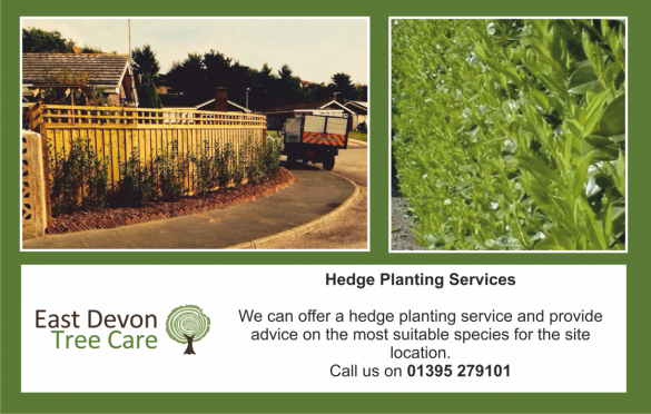Hedge Planting in Devon