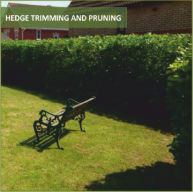 Hedge Trimming Image