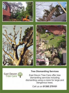 Tree Dismantling Services in Devon