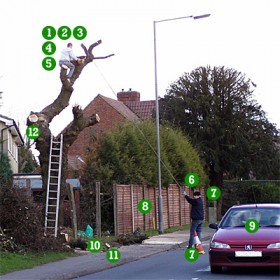 Is Your Tree Surgery Contractor Up To The Job Devon