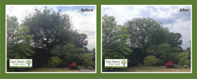 Exmouth Tree Surgeon - Oak Tree Crown Reduction