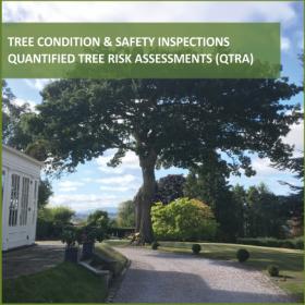 Tree QTRA Image